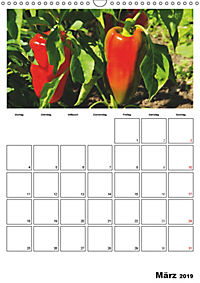 Frisches Gemüse (Wandkalender 2019 DIN A3 hoch) - Produktdetailbild 3