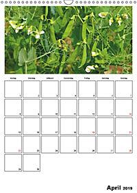 Frisches Gemüse (Wandkalender 2019 DIN A3 hoch) - Produktdetailbild 4