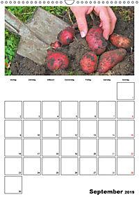 Frisches Gemüse (Wandkalender 2019 DIN A3 hoch) - Produktdetailbild 9