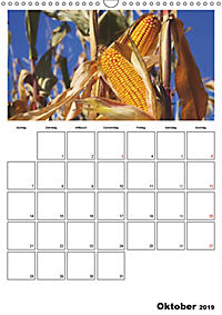 Frisches Gemüse (Wandkalender 2019 DIN A3 hoch) - Produktdetailbild 10