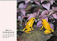 Froschig schön! Dekorative Könige der Tümpel und Teiche (Wandkalender 2019 DIN A2 quer) - Produktdetailbild 2