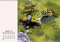 Froschig schön! Dekorative Könige der Tümpel und Teiche (Wandkalender 2019 DIN A2 quer) - Produktdetailbild 10