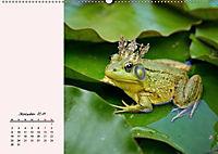 Froschig schön! Dekorative Könige der Tümpel und Teiche (Wandkalender 2019 DIN A2 quer) - Produktdetailbild 1