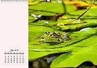 Froschig schön! Dekorative Könige der Tümpel und Teiche (Wandkalender 2019 DIN A2 quer) - Produktdetailbild 3