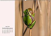 Froschig schön! Dekorative Könige der Tümpel und Teiche (Wandkalender 2019 DIN A2 quer) - Produktdetailbild 9