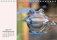 Froschig schön! Dekorative Könige der Tümpel und Teiche (Tischkalender 2019 DIN A5 quer) - Produktdetailbild 1