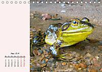 Froschig schön! Dekorative Könige der Tümpel und Teiche (Tischkalender 2019 DIN A5 quer) - Produktdetailbild 3