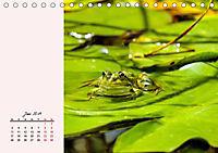 Froschig schön! Dekorative Könige der Tümpel und Teiche (Tischkalender 2019 DIN A5 quer) - Produktdetailbild 6