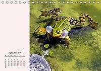 Froschig schön! Dekorative Könige der Tümpel und Teiche (Tischkalender 2019 DIN A5 quer) - Produktdetailbild 9