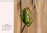 Froschig schön! Dekorative Könige der Tümpel und Teiche (Tischkalender 2019 DIN A5 quer) - Produktdetailbild 5