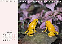Froschig schön! Dekorative Könige der Tümpel und Teiche (Tischkalender 2019 DIN A5 quer) - Produktdetailbild 10