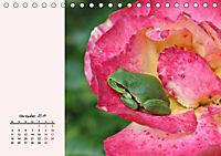 Froschig schön! Dekorative Könige der Tümpel und Teiche (Tischkalender 2019 DIN A5 quer) - Produktdetailbild 11