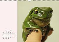 Froschig schön! Dekorative Könige der Tümpel und Teiche (Wandkalender 2019 DIN A3 quer) - Produktdetailbild 2