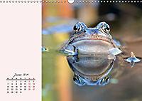 Froschig schön! Dekorative Könige der Tümpel und Teiche (Wandkalender 2019 DIN A3 quer) - Produktdetailbild 1