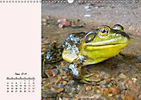 Froschig schön! Dekorative Könige der Tümpel und Teiche (Wandkalender 2019 DIN A3 quer) - Produktdetailbild 3