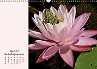 Froschig schön! Dekorative Könige der Tümpel und Teiche (Wandkalender 2019 DIN A3 quer) - Produktdetailbild 8