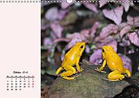 Froschig schön! Dekorative Könige der Tümpel und Teiche (Wandkalender 2019 DIN A3 quer) - Produktdetailbild 10