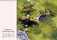 Froschig schön! Dekorative Könige der Tümpel und Teiche (Wandkalender 2019 DIN A3 quer) - Produktdetailbild 9