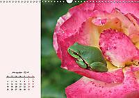 Froschig schön! Dekorative Könige der Tümpel und Teiche (Wandkalender 2019 DIN A3 quer) - Produktdetailbild 11