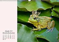 Froschig schön! Dekorative Könige der Tümpel und Teiche (Wandkalender 2019 DIN A3 quer) - Produktdetailbild 12