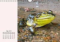 Froschig schön! Dekorative Könige der Tümpel und Teiche (Wandkalender 2019 DIN A4 quer) - Produktdetailbild 3