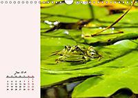 Froschig schön! Dekorative Könige der Tümpel und Teiche (Wandkalender 2019 DIN A4 quer) - Produktdetailbild 6
