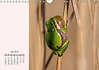 Froschig schön! Dekorative Könige der Tümpel und Teiche (Wandkalender 2019 DIN A4 quer) - Produktdetailbild 5