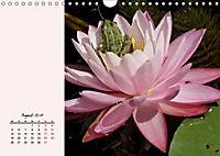 Froschig schön! Dekorative Könige der Tümpel und Teiche (Wandkalender 2019 DIN A4 quer) - Produktdetailbild 8