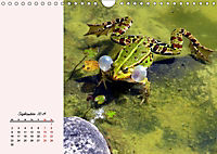 Froschig schön! Dekorative Könige der Tümpel und Teiche (Wandkalender 2019 DIN A4 quer) - Produktdetailbild 9
