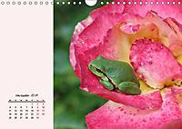 Froschig schön! Dekorative Könige der Tümpel und Teiche (Wandkalender 2019 DIN A4 quer) - Produktdetailbild 11