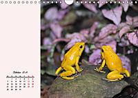 Froschig schön! Dekorative Könige der Tümpel und Teiche (Wandkalender 2019 DIN A4 quer) - Produktdetailbild 10