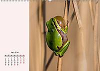 Froschig schön! Dekorative Könige der Tümpel und Teiche (Wandkalender 2019 DIN A2 quer) - Produktdetailbild 5