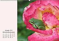 Froschig schön! Dekorative Könige der Tümpel und Teiche (Wandkalender 2019 DIN A2 quer) - Produktdetailbild 11