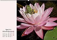 Froschig schön! Dekorative Könige der Tümpel und Teiche (Wandkalender 2019 DIN A2 quer) - Produktdetailbild 8