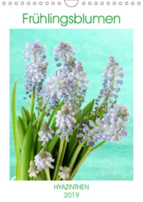 Frühlingsblumen Hyazinthen (Wandkalender 2019 DIN A4 hoch), Gisela Kruse