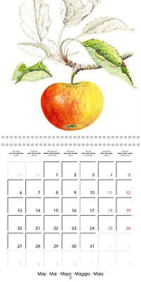 FRUITS SELECTED PAINTINGS BY YANNY PETTERS (Wall Calendar 2019 300 × 300 mm Square) - Produktdetailbild 5