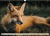 Fuchs - schlauer Räuber (Wandkalender 2019 DIN A3 quer) - Produktdetailbild 5