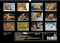 Fuchs - schlauer Räuber (Wandkalender 2019 DIN A3 quer) - Produktdetailbild 13