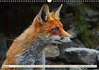 Fuchs - schlauer Räuber (Wandkalender 2019 DIN A3 quer) - Produktdetailbild 6