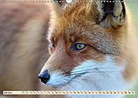 Fuchs - schlauer Räuber (Wandkalender 2019 DIN A3 quer) - Produktdetailbild 7