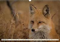 Fuchs - schlauer Räuber (Wandkalender 2019 DIN A3 quer) - Produktdetailbild 9