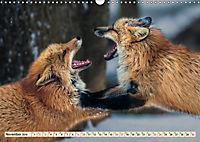 Fuchs - schlauer Räuber (Wandkalender 2019 DIN A3 quer) - Produktdetailbild 11
