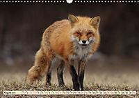 Fuchs - schlauer Räuber (Wandkalender 2019 DIN A3 quer) - Produktdetailbild 8