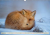 Fuchs - schlauer Räuber (Wandkalender 2019 DIN A3 quer) - Produktdetailbild 1