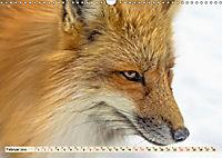 Fuchs - schlauer Räuber (Wandkalender 2019 DIN A3 quer) - Produktdetailbild 2