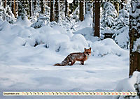Fuchs - schlauer Räuber (Wandkalender 2019 DIN A3 quer) - Produktdetailbild 12