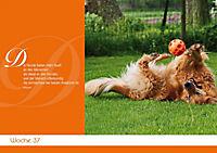 Für Hundeliebhaber - Produktdetailbild 1