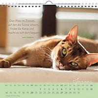Für Katzenfreunde 2019 - Produktdetailbild 1
