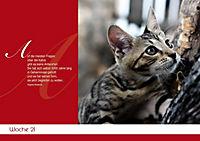 Für Katzenliebhaber - Produktdetailbild 1