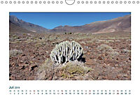 Fuerteventura. Die karge Schöne der Kanaren (Wandkalender 2019 DIN A4 quer) - Produktdetailbild 7